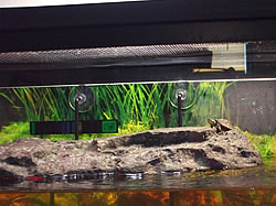 Inside of a turtle tank, showing the screen cover toward the top of the picture