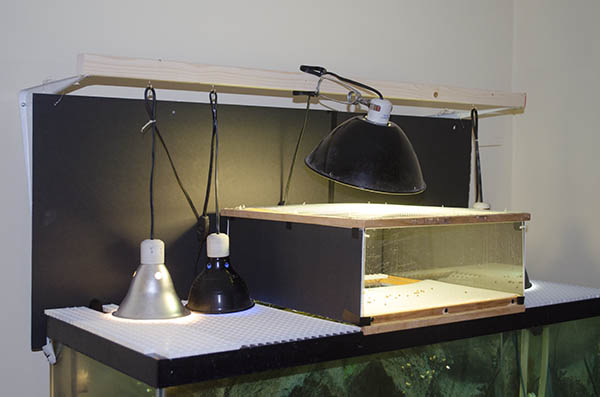 Array of turtle tank lights hanging from a wooden hanger over a turtle tank.