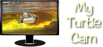 MyTurtleCam.com - Information about keeping pet turtles, with a live video feed.