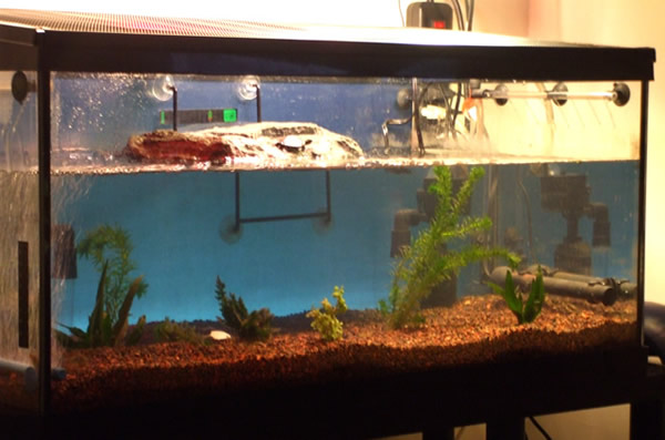 An aquatic turtle tank with clean water